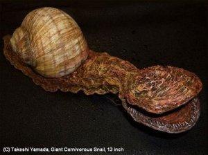[Gambar: carniverous-snail.jpg]