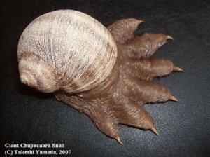 [Gambar: chupacabras-snail.jpg]