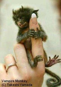 [Gambar: vampire-monkey.jpg]